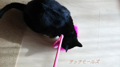 ダイソー|猫じゃらし